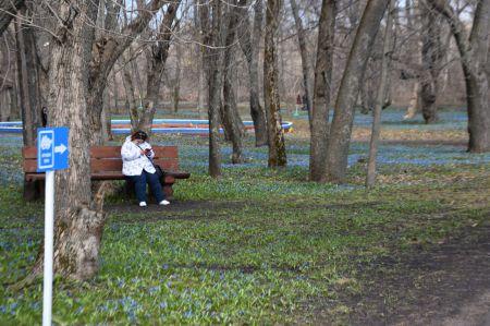 Заморозки отступят из Тамбова к концу недели