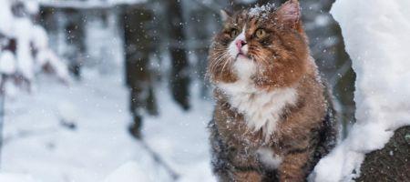 В Тамбове среди недели выпадет снег