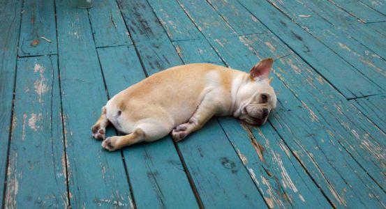 Аномальная жара в Тамбове сменится прохладой
