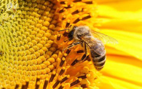 В Тамбовской области занялись решением проблемы гибели пчел