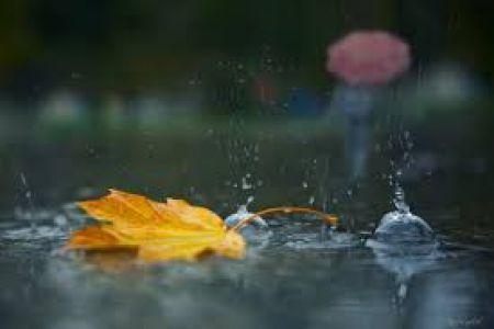 В Тамбове всю неделю будет лить дождь