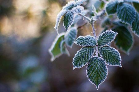 В Тамбов придут первые заморозки