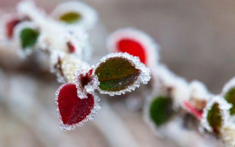 В Тамбов придут десятиградусные морозы
