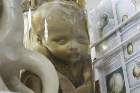 Тамбовский Музей греха вошел в число самых удивительных музеев России