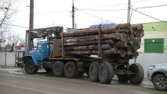 Тамбовчанин и брянец украли сосны с территории Галдымского лесничества