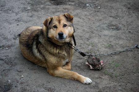 В Тамбовской области СК проверит законность отлова животных